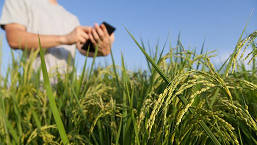 Gestão para o agronegócio, vale à pena investir?